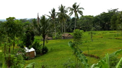 Beautiful Terraced Rice Fields, Paddy Field, Palm Trees, Bali, Indonesia - stock footage
