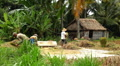 Workers in Rice Fields, Farm, Paddy Field, Manual Labor, Bali, Indonesia Footage