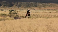 Cowboy Riding Horse (HD) co Stock Footage