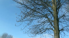 Bare Tree Branches and Blue Sky Stock Footage