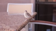 Stock Video Footage of Bird Pooping On Restaurant Table