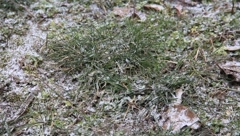 Cold end autumn on the ground - stock footage