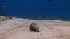 Hermit crab sand Stock Footage