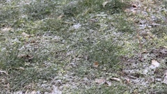 Small snow on green grass Stock Footage