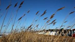 Beach-grass and blue sky Stock Footage