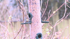 Coal Tit on feeder Stock Footage