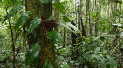 Interior of tropical rainforest tracking shot - stock footage