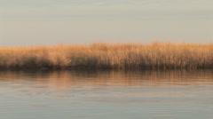 Marsh Grass Stock Footage