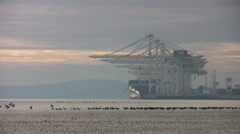 Birds In The Port Stock Footage