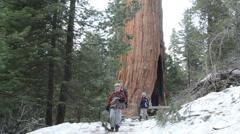 Siblings walk by general grant sequoia Stock Footage