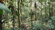 Stock Video Footage of Running through tropical rainforest
