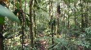 Running through tropical rainforest Stock Footage