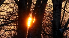 timelapse with sunset in winter forest - stock footage
