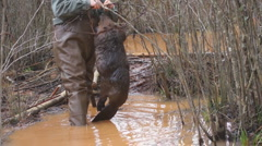 Beaver Trapping - stock footage