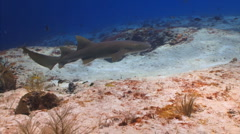 Shark swimming over a coral reef Stock Footage