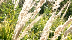 Stems of dry grass Stock Footage