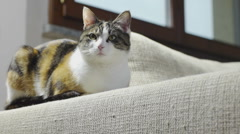 Cat sitting on scratched sofa and close-up of damaged couch Stock Footage
