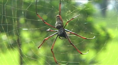 Big spider in web Stock Footage