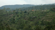 Large terraced rice field and palm trees in Bali Island, Indonesia Archipelago Stock Footage