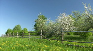 Apple blossom spring time Stock Footage