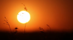 Swaying grass against a setting sun Stock Footage