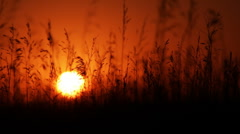 Field at sunset w/ shallow dof - stock footage