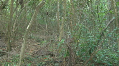 Forest PAN Right Stock Footage