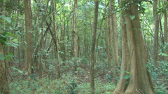 Tree Quick Pan in Forest Stock Footage