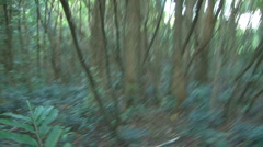 Running through Nature Tress in a Green Forest Stock Footage