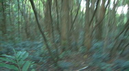 Stock Video Footage of Running through Nature Tress in a Green Forest