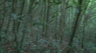 Stock Video Footage of Walking Uphill in a Green Forest 2