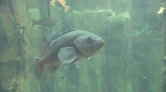 Fish Swimming - stock footage