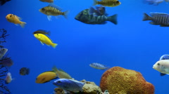 Aquarium Fish Stock Footage