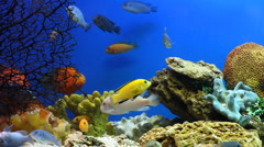 Aquarium Fish - stock footage
