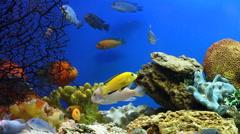 Stock Video Footage of Aquarium Fish