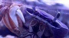 Aquarium Crab Stock Footage