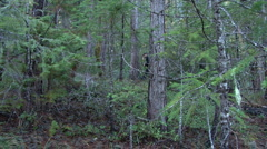 Stealthy rifleman in forest Stock Footage