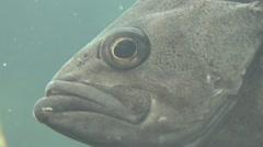 Stock Video Footage of Profile of Fish in Aquarium