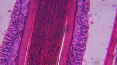 1080P HD CSI & Sci Fi Style Microscopic Slides of Organs and Tissues Stock Footage