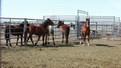 Wild Mustang horses locked in corral P HD 8880 Stock Footage