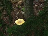 Mushroom Stock Footage