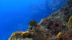 Coral reef locked - stock footage
