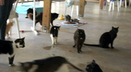 Stock Video Footage of cats at no kill shelter