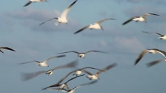 Seagulls Flying Stock Footage