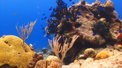 Stock Video Footage of Coral reef locked