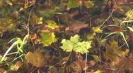 Underwater maple leaf   Stock Footage