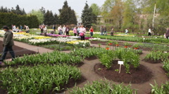 VII Exhibition of flowering bulbs and biennials Spring Symphony Stock Footage