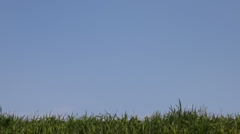 Little girl goes on green grass Stock Footage