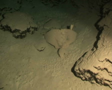 bones in cave diving underwater video - stock footage