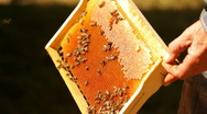Honey in the apiary Stock Footage